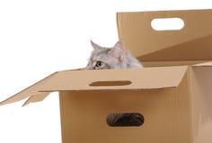 Silver cat in paper box. Stock Photo