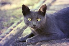 Silver cat Stock Images