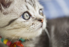 Silver cat. `s photo,cut cat Stock Image