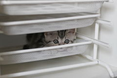 Silver cat. `s photo,cute cat Stock Images