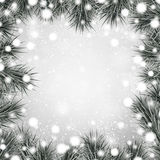 Silver christmas background with spruce branches. Stock Photos