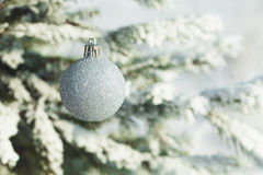Silver Christmas balls hanging on a branch of fir tree Royalty Free Stock Photo
