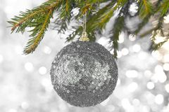 Silver Christmas or Xmas ball ornaments hanging on Christmas or pine tree branch in theme frozen. royalty free stock images