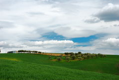 Silver clouds. Green wheat field with blue, olive trees and silver sky royalty free stock image