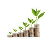 Silver coin stack and treetop in concept of business growth. Stock Photography