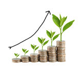 Silver coin stack and treetop in concept of business growth. Stock Images