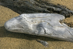 Silver colored driftwood log on the beach at Flafstaff Lake. Royalty Free Stock Images