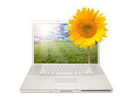 Silver Computer Laptop Isolated with Sunflower. Silver Computer Laptop Isolated with Yellow Sunflower Extruding the Monitor Screen stock images