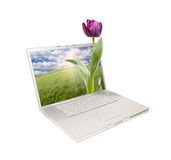 Silver Computer Laptop Isolated with Tulip Stock Images