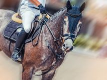 Dapple gray dressage horse and rider in uniform performing jump at show jumping competition. Equestrian sport background. Stock Images