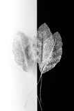Silver decorative leaves Stock Images