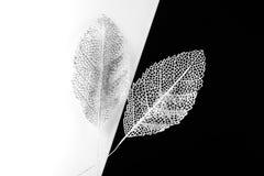 Silver decorative leaves Stock Photo