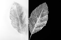 Silver decorative leaves Royalty Free Stock Photo