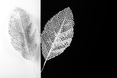 Silver decorative leaves Royalty Free Stock Photography