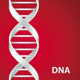 Silver Dna Dna. 3d stile,  illustration,  on red background. Silver Dna Dna. Vector illustration,  on red background Royalty Free Stock Photo