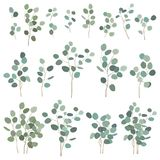 Silver dollar eucalyptus elements, isolated on white background. Vector illustration set, big and small branches for royalty free illustration