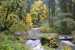 Silver Falls State Park, Oregon. This is an image of the stream running through Silver Falls State Park in Oregon during autumn Stock Photo