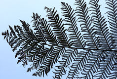 Silver Fern Branches Stock Photos