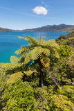 Silver ferns growing at Marlborough Sounds in New Zealand Stock Photos