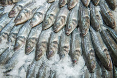 Silver fish on ice Stock Photography