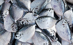 Silver fish of medium size lying on the counter Royalty Free Stock Photos