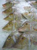 Silver fishes Stock Photos
