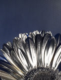 Silver flover Stock Photo