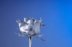 The silver flover Royalty Free Stock Photo