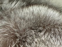 Silver fox fur Stock Photography