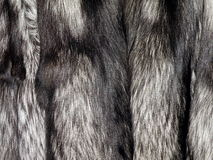 Silver fox fur Royalty Free Stock Image