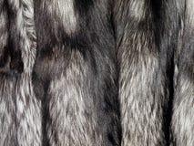 Silver fox fur Royalty Free Stock Image