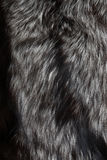 Silver Fox Fur Stock Photo