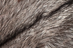 Silver fox fur background. Silver fox fur texture as horizontal background Royalty Free Stock Photos