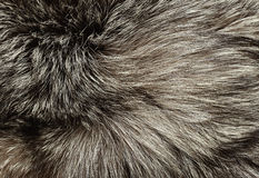Silver fox fur. Texture for background Stock Photo
