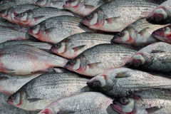 Silver fresh fish on ice Stock Photo