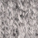 Silver fur texture. Section of thick silver fur Stock Photography