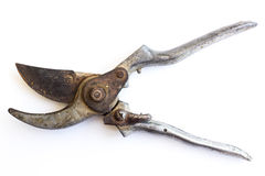 Silver garden secateurs. On white background Royalty Free Stock Images