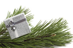 Silver gift on the scpuce. Silver gift on the spruce white background Royalty Free Stock Images