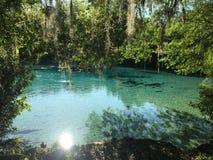 Silver Glen Springs Arkivbilder