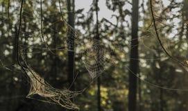 Silver and gold cobweb near Kladska pond royalty free stock images
