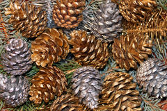 Silver and golden pine cone. Stock Images
