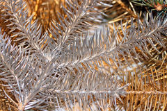 Silver and golden pine tree branches Stock Images