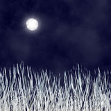 Silver Grass in The Nigth stock photos