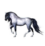 Silver gray horse Royalty Free Stock Photos