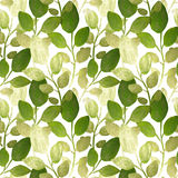 Silver and green hand-painted leaves on white background, seamless pattern Royalty Free Stock Photos