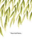 Silver and green hand-painted willow leaves on white background with place for your text Stock Photo