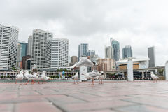 Silver Gull in Darling Harbour, Sydney, Australia. Royalty Free Stock Image