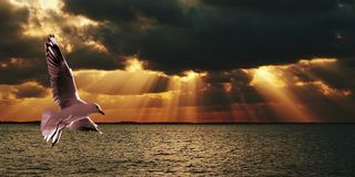 Silver Gull & Sunbeams - Sunset at Sea. Royalty Free Stock Photo
