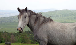 Silver Horse In Mountain stock images