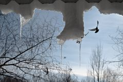Silver icicles and soaring birds stock photo